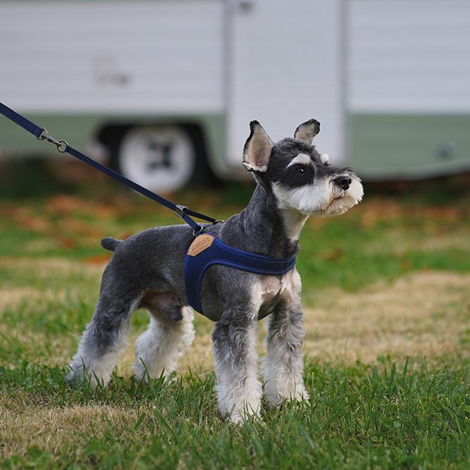Charlie's Backyard Easy Harness Hundegeschirr